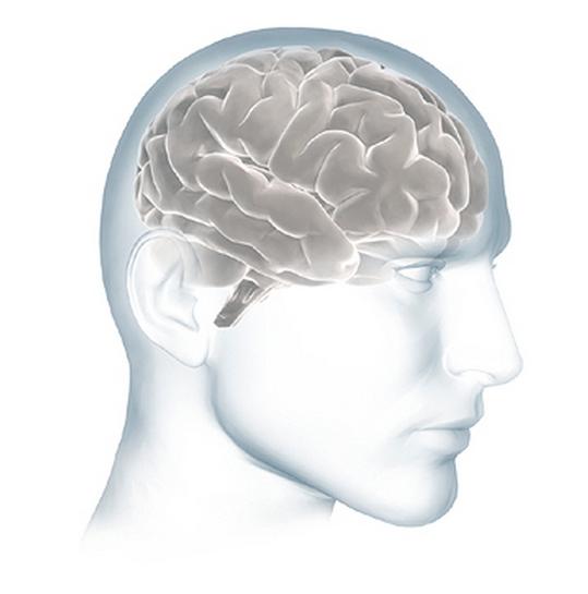 Get inside in the human (Alzheimer's) brain